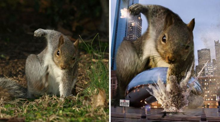 Squirrel Photographed In Heroic Pose Becomes Star Of Hilarious - Squirrel photographed in heroic pose becomes star of hilarious photoshop battle