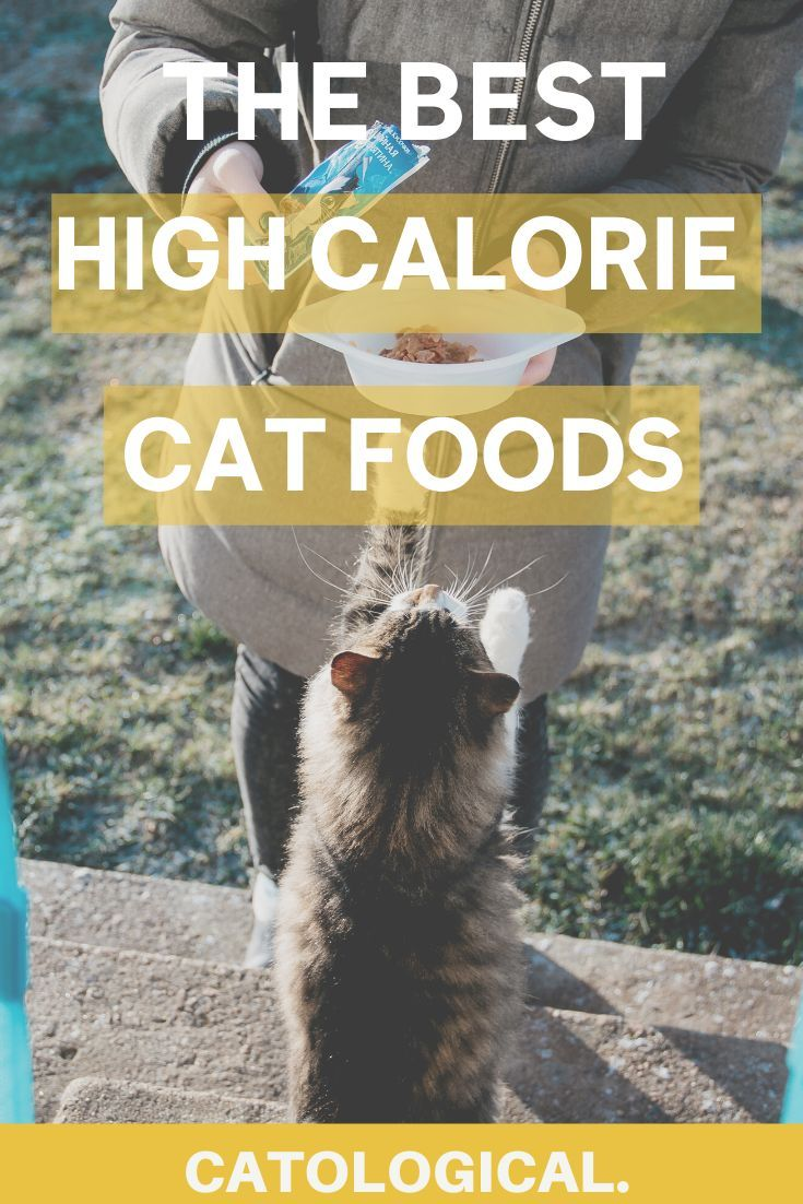 Pin On Cat Weight Management