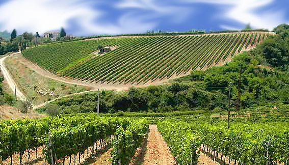 Italian Flavor Consortium - Italian wine and food, white wine, red wine, quality wine - News