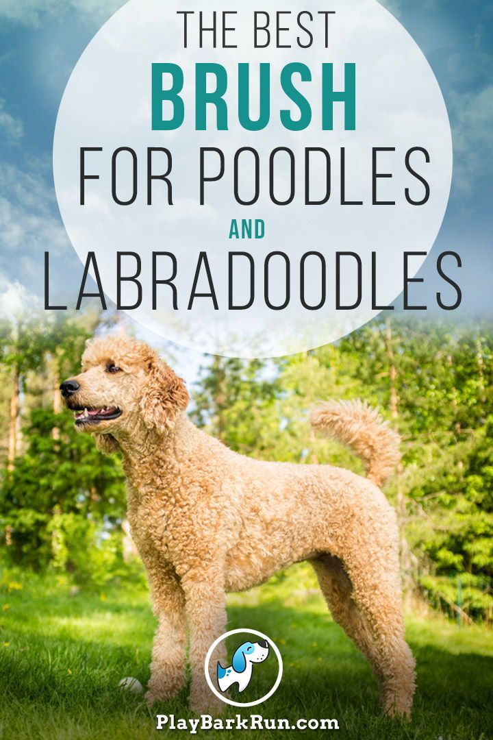 Professional Groomers Finally Reveal How To Brush And Dematt Your Dog Like The Experts Learn The Secret Tools To Brushing Your In 2020 Labradoodle Goldendoodle Poodle