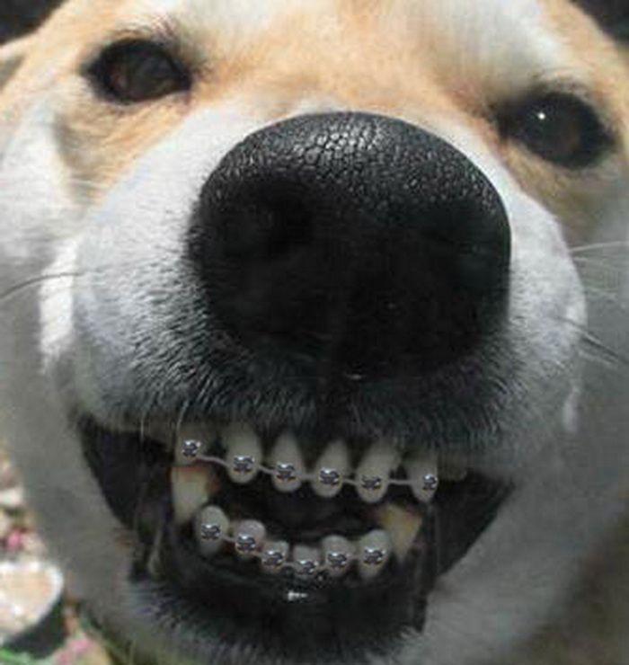 Dog Braces NYC | Hepburnlovesgivenchy.com of Teeth Braces