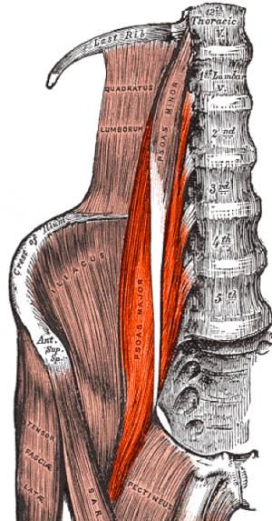 Learn the importance of the iliopsoas muscle group, how to strengthen it, and how to lengthen it for those who are tight in this area.