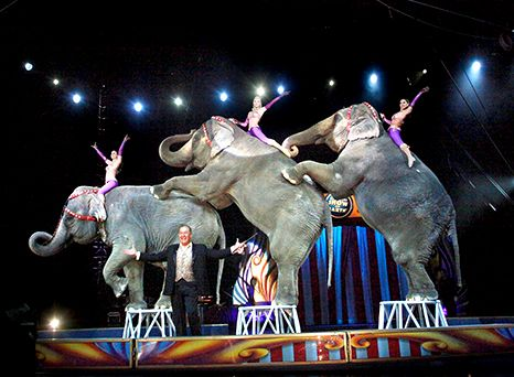 Elephants Retire Early | Ringling Bros. and Barnum & Bailey circus will no longer include performing elephants. | Science World Magazine