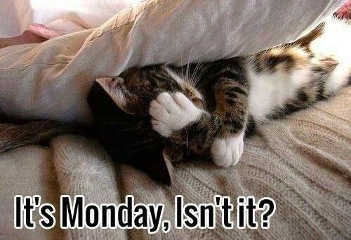 Image result for monday morning cat images