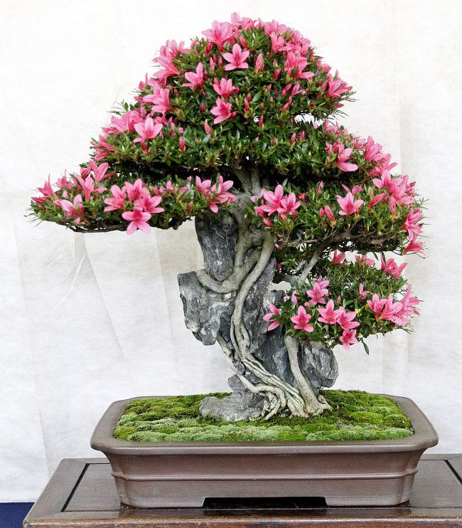 pictures of beautiful bonsai trees and plants
