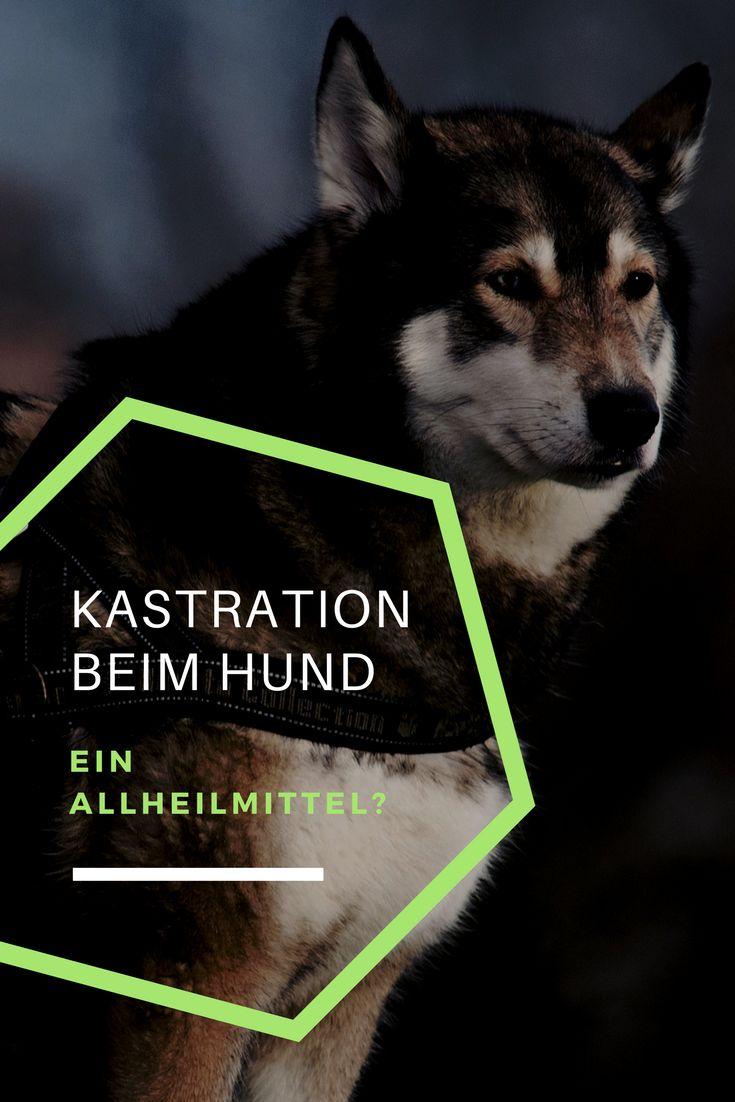 Wann ist eine Kastration beim Hund sinnvoll? Welche Risiken sollten bedacht werden?