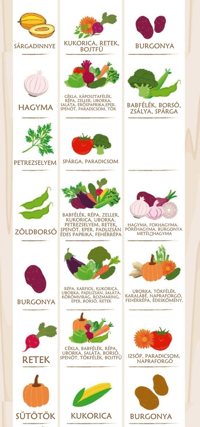 sokszinuvidek.24.hu app uploads sites 11 2016 05 1463173582-1462900453-companion-planting-vegetable-best-friend-suggestions-infographic223232323.jpg