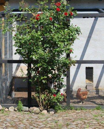 Hønsegården