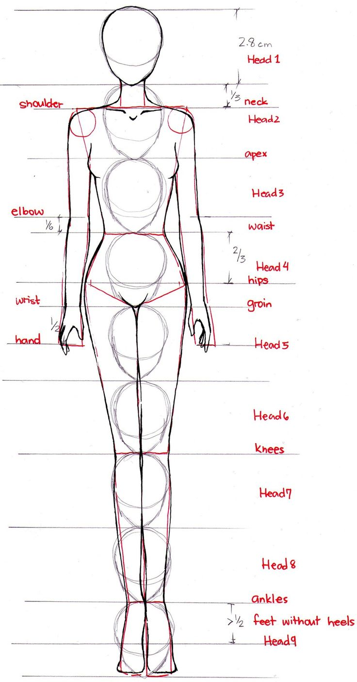 How to proportion the anime/manga/fashion style female body. -- Drawing tools, inspiration, tutorial