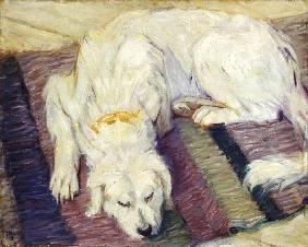 Franz Marc - Liegender Hund (Hundeportrait)