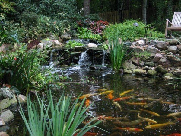 17 meilleures id es propos de bassin pour poisson sur pinterest etang de jardin bassin et for Bassin de jardin facile