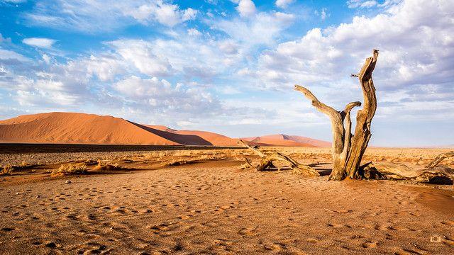 Sossusvlei Namibia Desert 4k Wallpaper Desktop Background In 2020 Nature Pictures Desktop Wallpapers Backgrounds Background