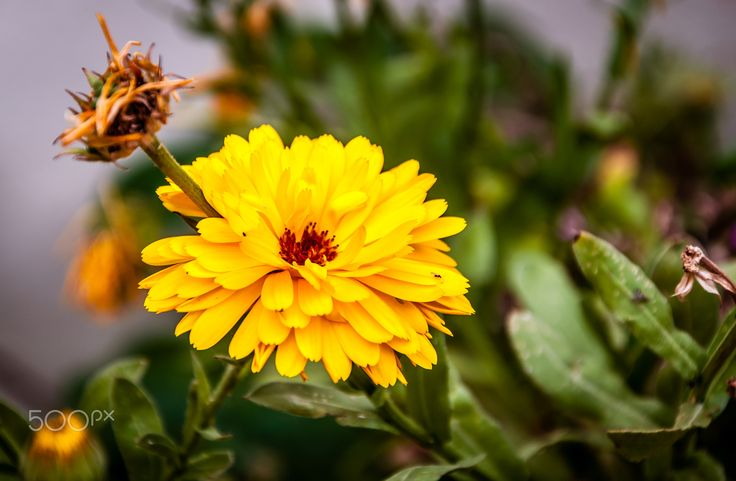 Beautiful flower - null
