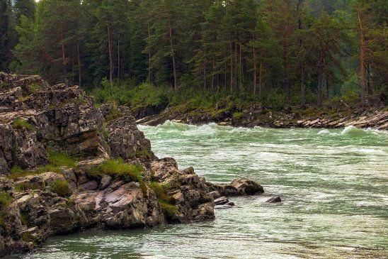 Река Катунь,Алтай. Россия...