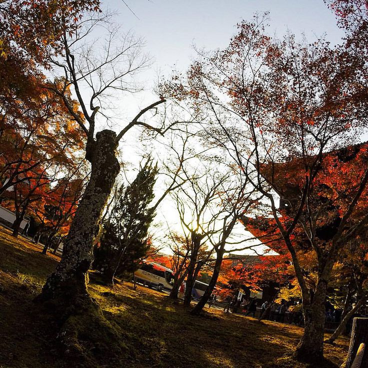 Autumn colors coming Kyoto 【 INFO  http://www.japan-guide.com/e/e3905.html 】 #mizumushikun #eyes #kyoto #view #landscape #autumn #autumncolours #colors #sky #nature #japan #trees #japanesemaple #maple