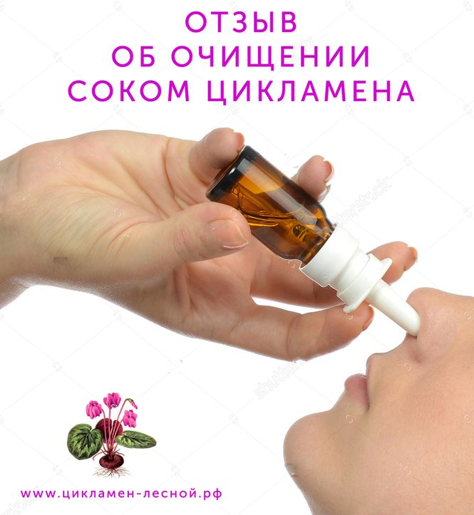 Цикламен лесной для лечения гайморита, насморка и очищения пазух носа