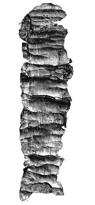 The Oldest Surviving Texts from the Hebrew Bible (Circa 600 BCE):  In 1979 two tiny silver scrolls, inscribed with portions of the well-known apotropaic Priestly Blessing of the Book of Numbers, and apparently once used as amulets, were found in one of a burial chambers at Ketef Hinnom,  an archaeological site near Jerusalem. The delicate process of unrolling the scrolls, while developing a method that would prevent them from disintegrating, took three years. Even though very brief...