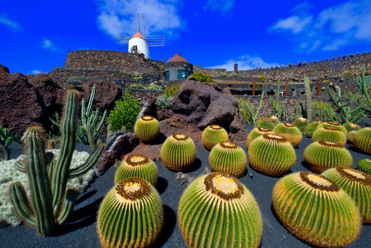 Lanzarote Cactus Garden, Carnary Islands, Spain. Photography by Jean-luc Bohin, 2013