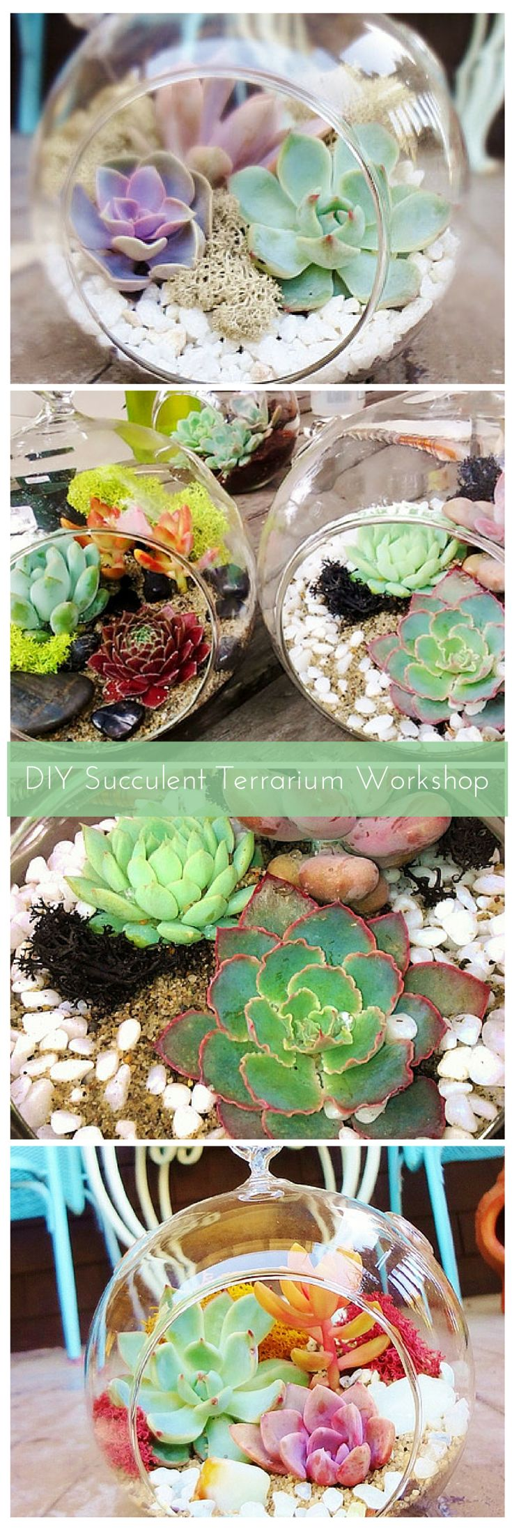 Get your hands dirty while learning all about how to Design with and care for #Succulents! DIY Terrariums in SanFrancisco