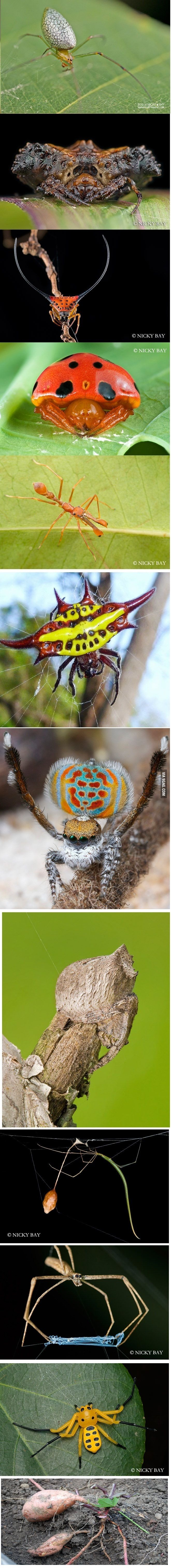 The most bizarre spiders species