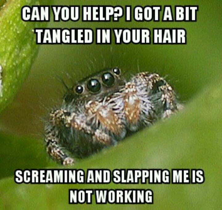 e3b4074ecabdeb9e9ad0e357ab063dc8 house spider spider meme 20 best memes {misunderstood spider} images on pinterest,Misunderstood Spider Meme