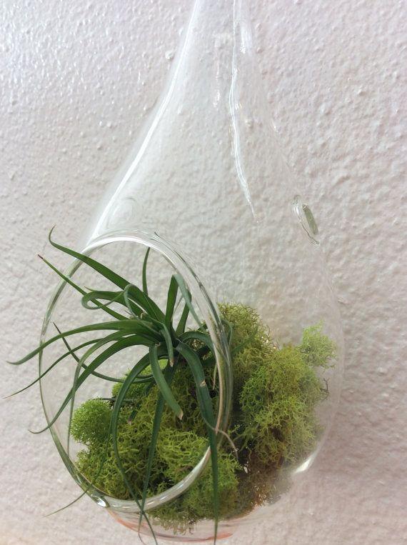 1000 id es sur le th me terrarium suspendu sur pinterest accrocher les plantes d 39 air plantes. Black Bedroom Furniture Sets. Home Design Ideas