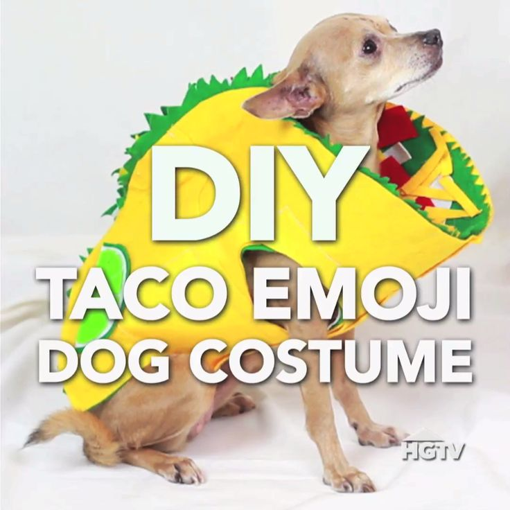 492 best easy halloween diy ideas images on pinterest halloween diy taco emoji dog costume solutioingenieria Choice Image