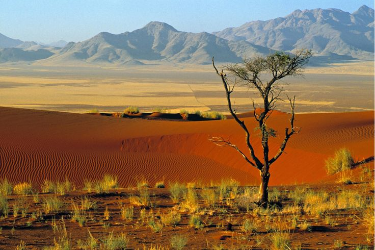 african nature - Buscar con Google