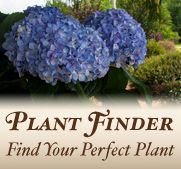 Plant Finder~Need to save this~Enter type plant,type sun,special feature,landscape use, etc & get list of ideal plants for situation. |Southern Living Plants