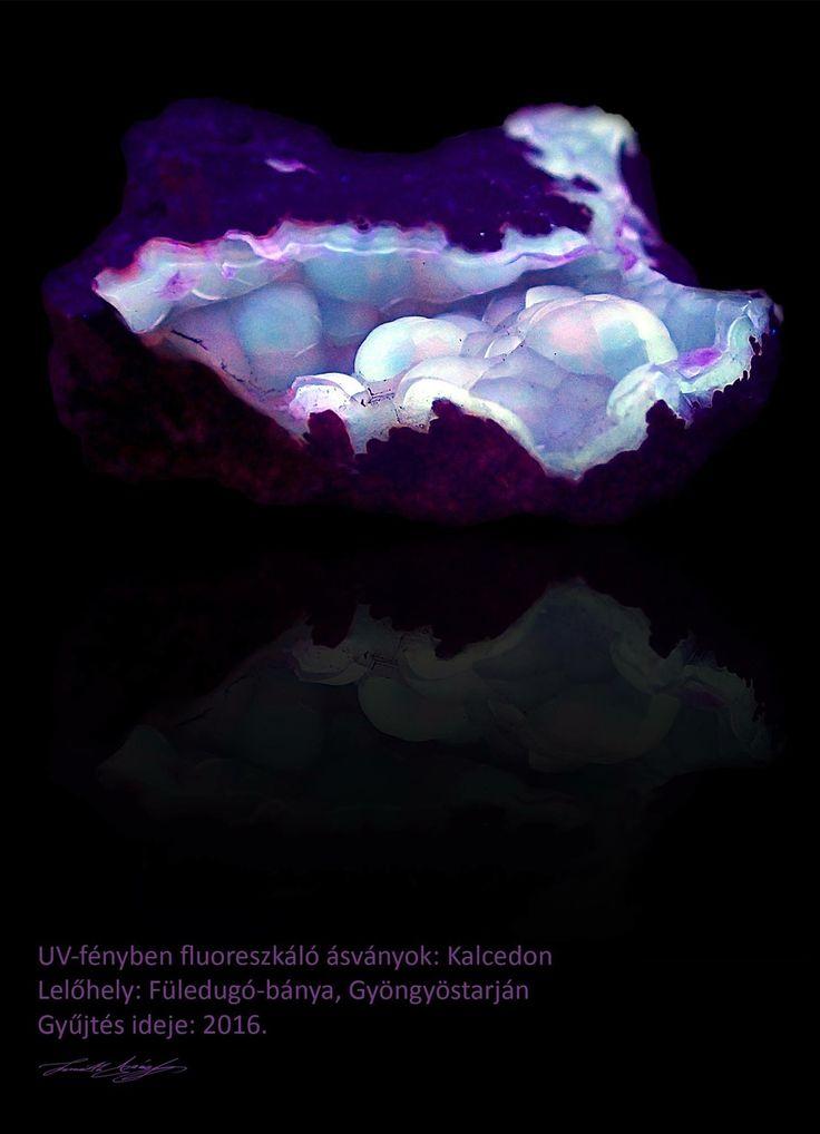 UV-fényben fluoreszkáló ásványok: Kalcedon Lelőhely: Füledugó-bánya, Gyöngyöstarján Gyűjtés ideje: 2016 #kalcedon #csiszolat #ásvány