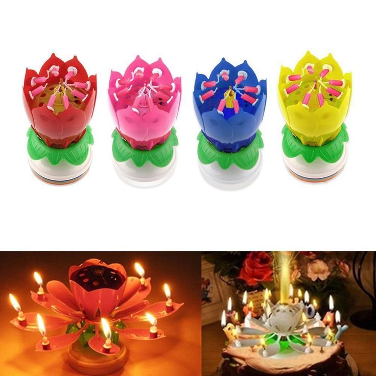 The candle first appears as a closed flower bud. Once