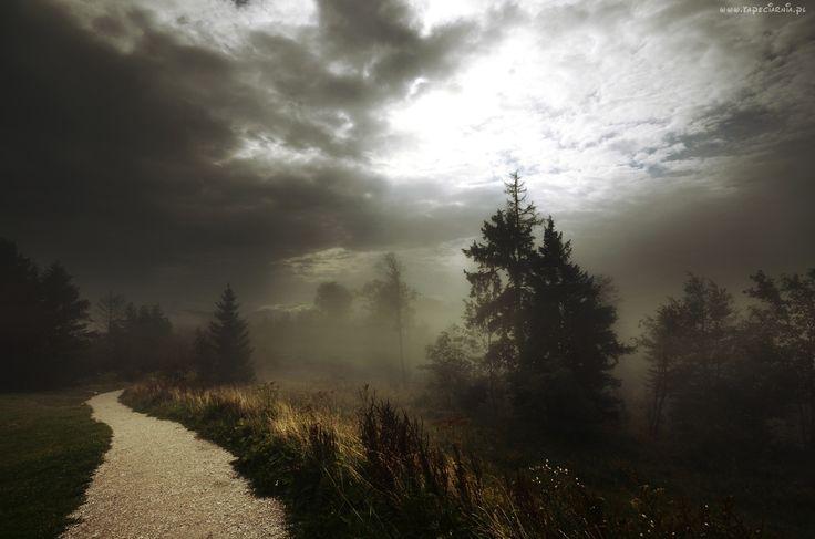 Las, Droga, Trawa, Mgła, Chmury