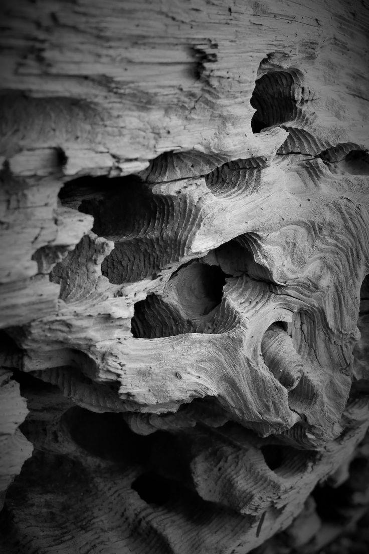 Bug eaten log