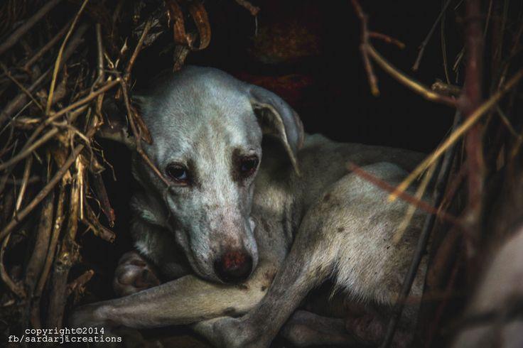 Innocence of a dog by Manbir singh on 500px