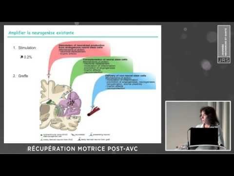 Récupération post-AVC (I. LOUBINOUX) - YouTube