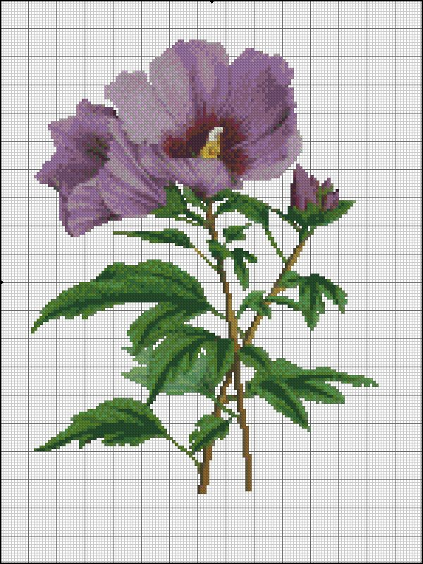 purple hybiscus