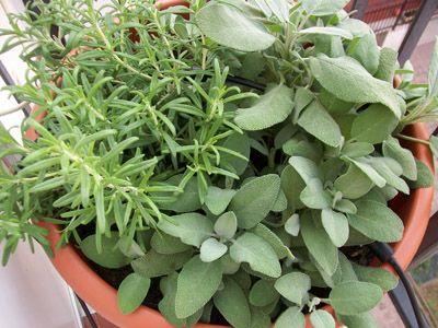Salvia e rosmarino: l'orto sul balcone  http://www.wewrite.it/Benessere/come-realizzare-un-orto-sul-balcone.html