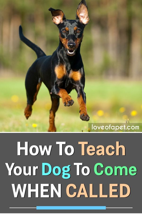 How To Teach Your Dog To Come When Called 7 Simple Steps Dog