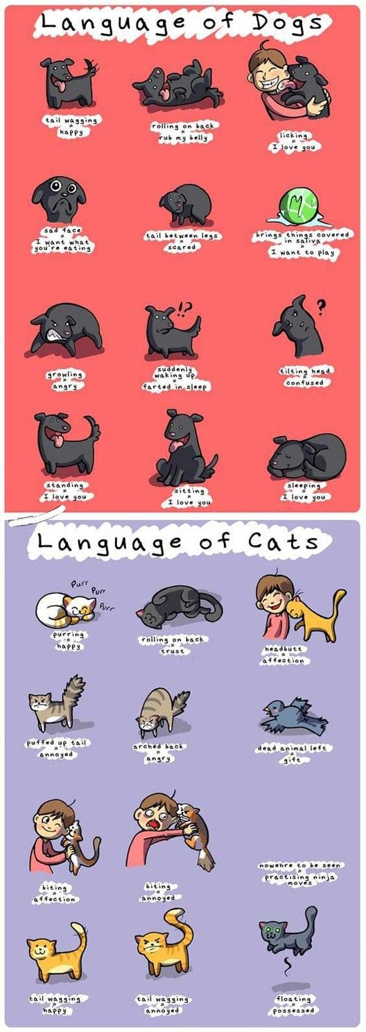 Language of dogs and cats… - Humor