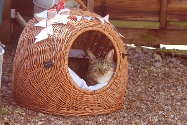 kitty fort; love the bunting!