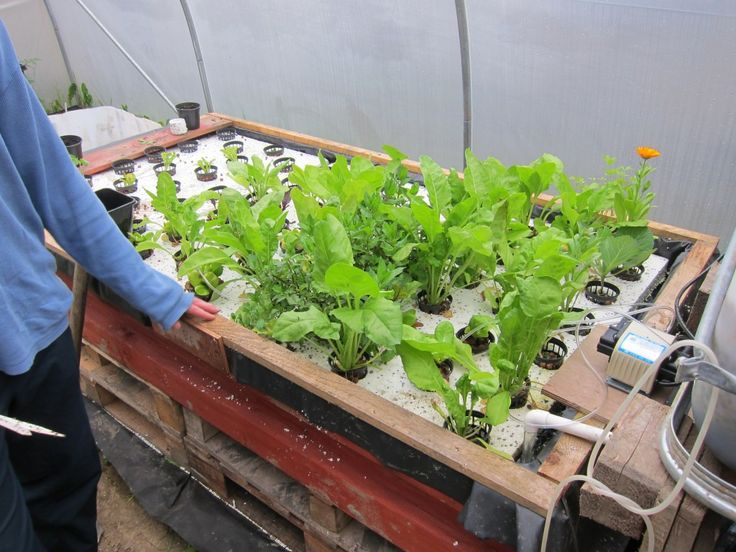 17 best images about future man agriculture on pinterest for Aquaponic source