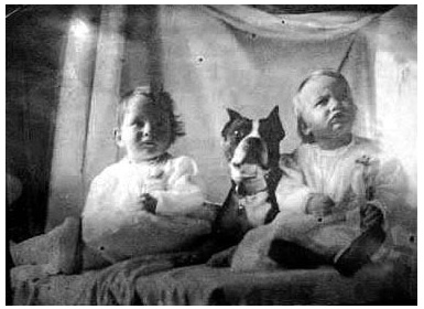 ... dogs on Pinterest | Vintage dog, Photo postcards and Dog photos