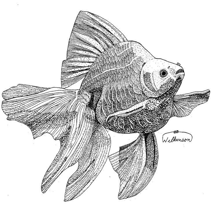 93 migliori immagini gold fish su pinterest pesce rosso for Pesce rosso butterfly