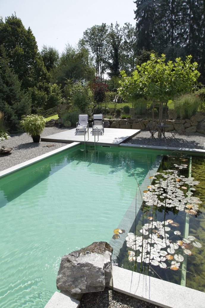 A Natural Swimming Pool, the Pros and Cons - Dig This Design