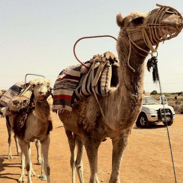 Tunesie kamelentocht met dochterlief