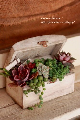 little wooden box with succulent plants. I have to do this, I am so good at growing and propagating succulents