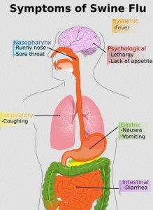 Leaky Gut Syndrome Linked to Disease - PamelaEgan.com