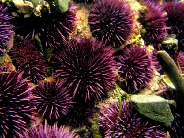 Tide pools dot the wild Oregon coast, but here are 12 surefire places for some intertidal action.