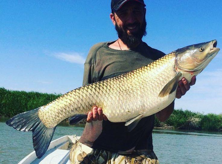 Фото от участника сообщества #Охотникикз  Константина Чукреева. Рыбалка в Алматинской области, Жидели. #рыбалка #сом #амур #белыйамур #охотникикз #fishing #ohotnikikz