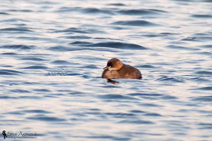 צילומים של שי אגמון מסדנת הדיג'יסקופינג של סברובסקי אופטיק http://yalon.co.il/article/28620